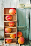 Ripe juicy apricots Royalty Free Stock Images