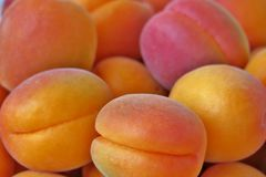 Ripe juicy apricots close up royalty free stock image