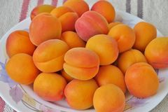 Ripe juicy apricots close up stock photography
