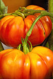 Ripe and juicy beefsteak tomatoes Royalty Free Stock Images