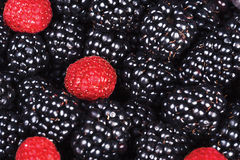 Ripe juicy berries blackberry and raspberry Royalty Free Stock Images
