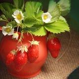Ripe juicy berries and jug Stock Images