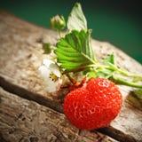 Ripe juicy berries Stock Image