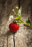 Ripe juicy berries on piece  wood Stock Photography