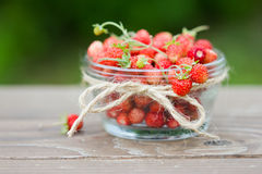 Ripe juicy berries of wild strawberries in a clear bowl. Closeup. Royalty Free Stock Photos