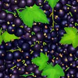 Ripe juicy black currant seamless background. Vector card illustration. Closely spaced fresh berry and leaves. Currant Royalty Free Stock Photos