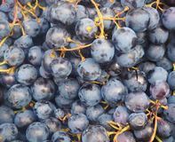 Ripe juicy black grapes in a market, background.  Stock Photo