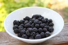 Ripe and juicy BlackBerry in a white plate on a green background. Plate useful BlackBerry in the village stock photos