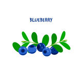 Ripe Juicy Blueberry on a White Background. Royalty Free Stock Photos