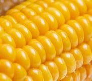 Ripe juicy boiled corn closeup Stock Image