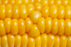 Ripe juicy boiled corn closeup Stock Photography