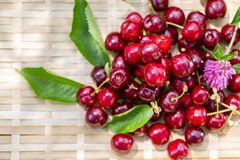 Free Ripe Juicy Cherries And Wildflowers Of Clover In The Garden In A Summer Day. Red Cherries. Sweet Summer Fruits. Copy Space. Macro. Royalty Free Stock Images - 183722119