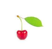 Ripe juicy cherry with green leaf. Stock Photos