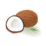 Ripe juicy coconut with leaf isolated on white. Whole and half Stock Photos