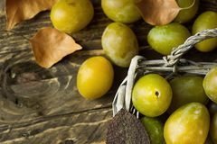 Ripe juicy colorful yellow and green plums in vintage wicker basket. Dry leaves. Dark wood background. Still life, copy space. Stock Photography