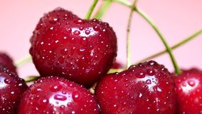 Ripe Juicy Dark Red Cherry with Drops of Water. Ripe Juicy Dark Red Cherry Rotates on Pink Background. Drops of Water on Fresh Cherry Berries. Pile of Cherry stock video