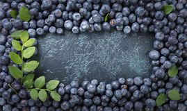 Ripe and juicy fresh picked blueberries closeup. Blueberry background.Top view Stock Photography
