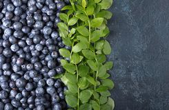 Ripe and juicy fresh picked blueberries closeup. Stock Photo
