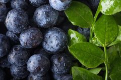 Ripe and juicy fresh picked blueberries closeup. Blueberry background.Top view Royalty Free Stock Images