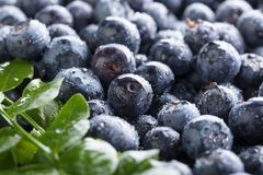 Ripe and juicy fresh picked blueberries closeup. Selective focus Stock Photos