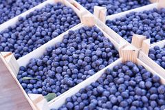 Ripe and juicy fresh picked blueberries. Fruits and vegetables at a farmers market. Ripe and juicy fresh picked blueberries. ts and vegetables at a farmers Stock Photo