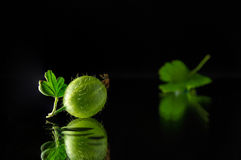 Ripe and juicy gooseberry. On a dark background Stock Photography