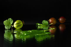 Ripe and juicy gooseberry. On a dark background Royalty Free Stock Photo