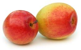 Ripe juicy jujube fruits Stock Image
