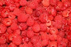 Ripe juicy large raspberries Royalty Free Stock Photography