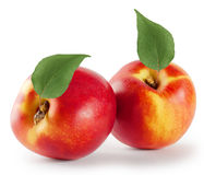 Ripe juicy nectarine with leaves Stock Image