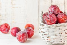Ripe Juicy Organic Big Red Plums in White Wicker Basket Scattered on Plank Wood Table. Autumn Fall Harvest. Rural Provence Style Interior. Copy Space. Banner Royalty Free Stock Photo