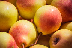 Ripe juicy pears close up Royalty Free Stock Images