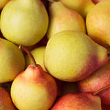 Ripe juicy pears close up Royalty Free Stock Image