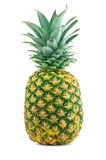 Ripe juicy pineapple. On white background Stock Photography