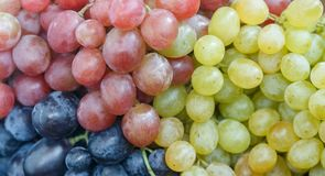 Ripe juicy pink, blue and white grapes. Selective focus Stock Photography