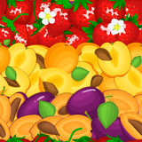 Ripe juicy plum apricot strawberry seamless background. Vector card illustration. Royalty Free Stock Photos