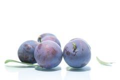 Ripe juicy plums Stock Photo