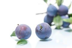 Ripe juicy plums Stock Image