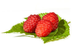 Ripe juicy raspberries Royalty Free Stock Photo