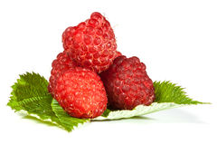 Ripe juicy raspberries Stock Images