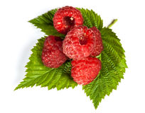 Ripe juicy raspberries Royalty Free Stock Photos