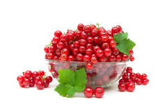Ripe juicy red currants on a white background Stock Photo