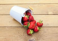 Ripe juicy red strawberries spill out of a white metal bucket on Stock Images