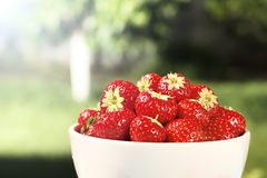 Ripe juicy strawberries in a bowl on a wooden background in the summer garden royalty free stock photography