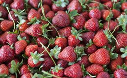 Ripe juicy strawberries closeup. Great background for a label jam, berry jam, strawberry juice, fruit wine.  Stock Photography