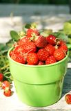 Ripe juicy strawberries in a green cup Stock Photography
