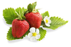 Ripe juicy strawberries, isolation Stock Images