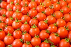 Ripe juicy tomatoes royalty free stock images