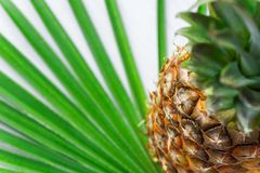 Ripe juicy whole pineapple on green palm tree leaf. Tropical fruits juices healthy lifestyle vitamins vegan. Travel vacation concept. Vibrant saturated colors royalty free stock photography
