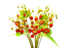 Ripe and juicy wild strawberry. Bouquet of ripe and juicy wild strawberries on a white background Stock Images